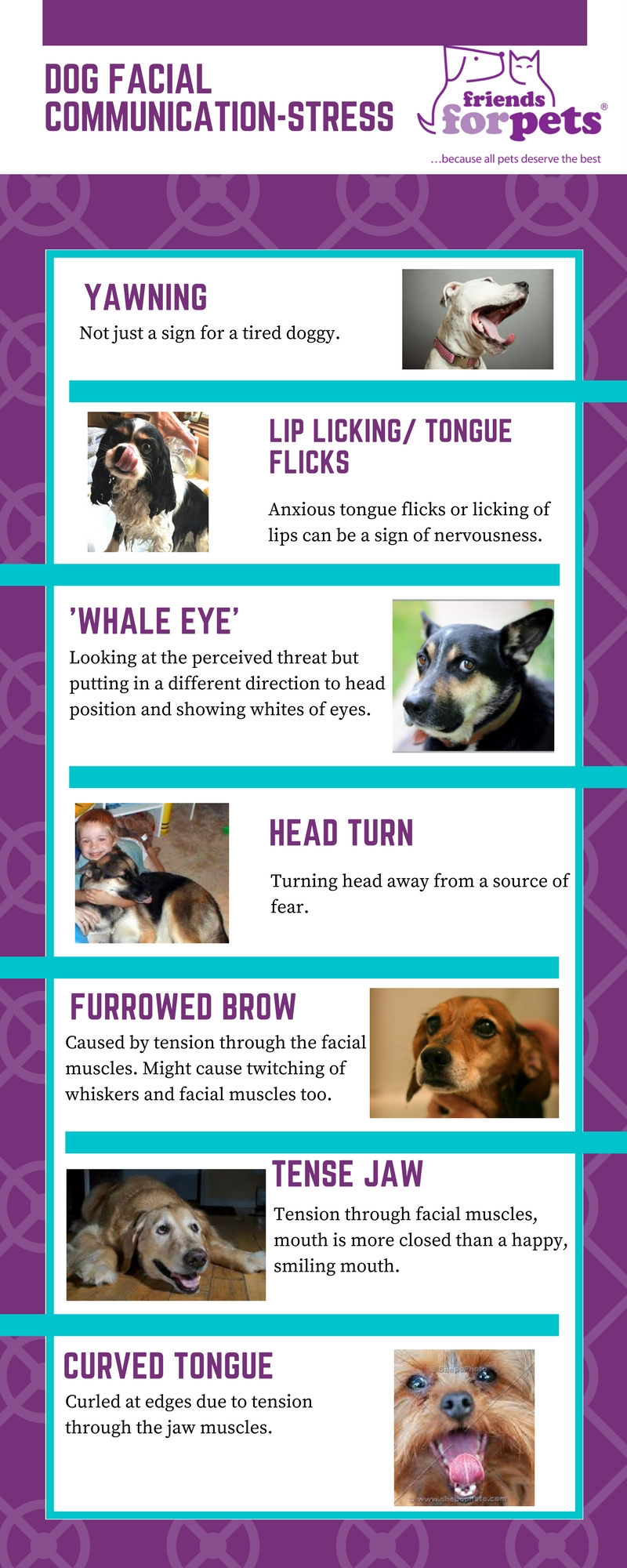 Dog Walking blog by Friends for Pets   Our Dog Walking blog written ...