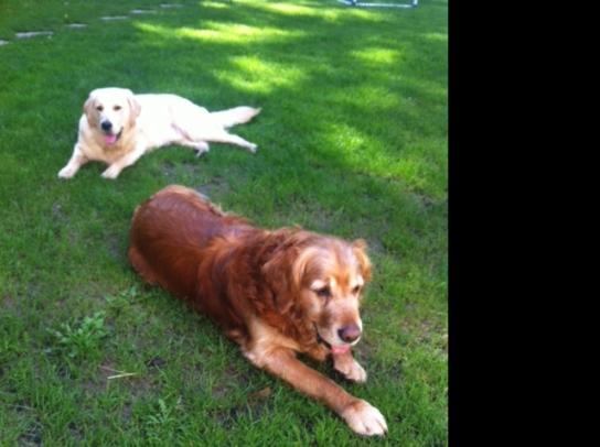 Dog Walking Jobs Somerset