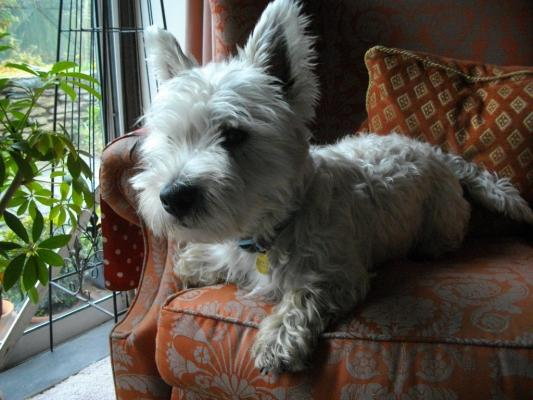 Corsham Dog Walking And Pet Service Corsham
