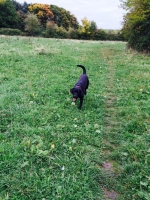 Dog Walking Wrington